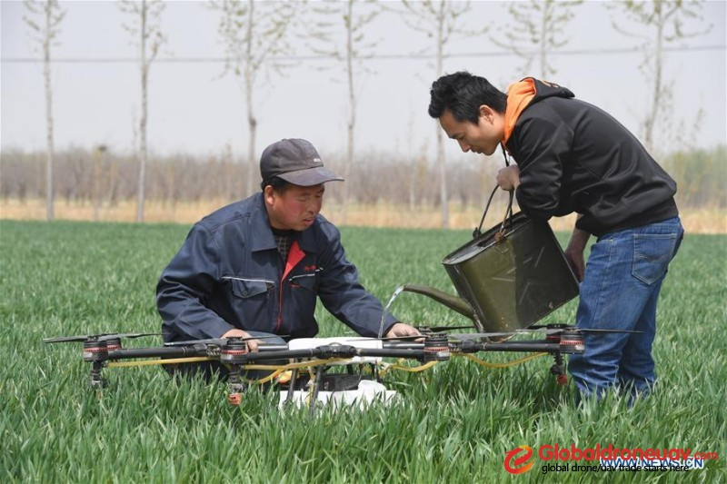 Drone sprays pesticide in wheat fields, north China